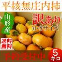 【送料無料】山形 庄内柿 訳あり 5kg(M・Sサイズ) バラ詰め 種なし 激安アウトレット