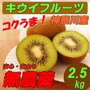 【送料無料】 国産 キウイフルーツ 無農薬 2.5kg スムージー用にも!グリーンキウイ 激安