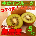 【送料無料】 国産 無農薬 キウイフルーツ 5kg グリーンキウイ ダイエット・スムージー用に…