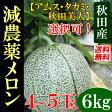 【送料無料】 秋田産 減農薬メロン 秀品 6kg(4〜5玉)