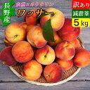 信州産 減農薬 ワッサー 訳あり 5kg 送料無料 白桃とネクタリンの交配