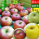 長野産 葉とらず りんご 訳あり 5kg 送料無料 リンゴ 減農薬