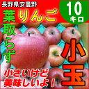 長野産 りんご 訳あり 小玉 10kg 蜜入り 信州産 葉取らず リンゴ サンふじ【送料無料】