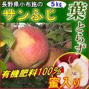 葉取らず リンゴ 訳あり 5kg サンふじ 長野産 リンゴ 送料無料 規格外 小布施