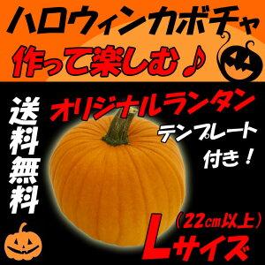 【送料無料】 国産 生 ハロウィンカボチャ Lサイズ(24cm以上) 無農薬ランタン! 自由に作って楽しもう♪