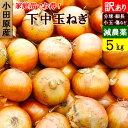 小田原産 下中玉ねぎ 訳あり 5kg 特別栽培(減農薬)