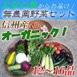 【送料無料】 無農薬 有機野菜 12〜16品目 オーガニック 野菜セットの詰め合わせ