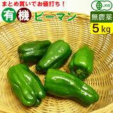 【送料無料】有機ピーマン 5kg 一箱 まとめ買い 無農薬のオーガニック ピーマン(九州産)