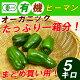 【送料無料】有機ピーマン 5kg 一箱 まとめ買い 無農薬のオーガニック ピーマン(九州産…