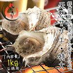 サザエさざえ中サイズ1kg天然活(1粒70〜80g/約13粒)福井県産