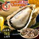 【2kg以上購入で1kgおまけ!】 カキ 牡蠣 かき 生食用