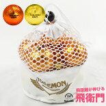 リーダーメディアテクノ飛衛門メッシュバッグ3色MIXカラーメタルボール12球(T-MTM)