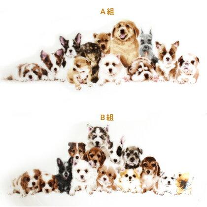 わんコレ スクエアプレート(小)【集合】犬雑貨 犬グッズ
