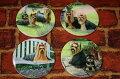 セラミックコースター・4枚セット【ヨークシャー・テリア】犬雑貨・犬グッズ・輸入雑貨【RCP】【楽ギフ_包装選択】