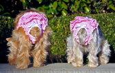 【DOGGIE DESIGN ドギーデザイン】Ruffled Pink Gingham Panties(犬用パンツ-ギンガムチェック) 【メール便対応】【マナーパンツ】
