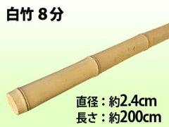 天然素材の白竹です。和風庭園つくりに、園芸支柱に大活躍!白竹 8分 φ24x2000 送料別