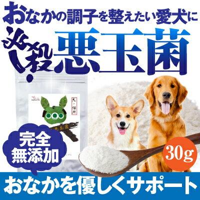 犬のサプリメント・乳酸菌