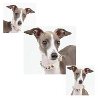 【新作】アイビーカラー首輪:Sサイズ【2014春夏新作】【PUPPIAパピア】paoa-ac1258【犬犬用ペットドッグ】【14spu】【10P02Mar14】