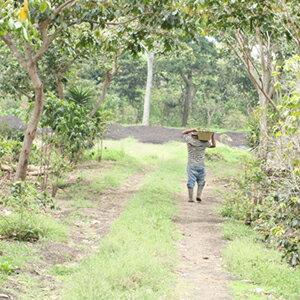 日本から12,600km。グァテマラ アンティグア地区で「奇跡の農園」に出会いました。グァテマラ...