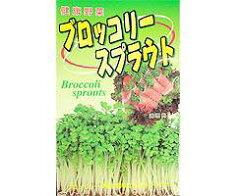 もやし類春蒔き種子ブロッコリースプラウト20mL小袋詰