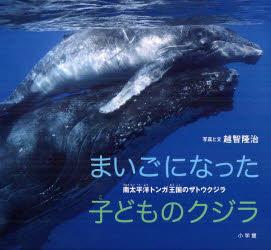【新品】【本】まいごになった子どものクジラ 南太平洋トンガ王国のザトウクジラ 越智隆治/写真と文