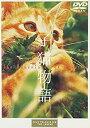 【中古】子猫物語 [DVD]
