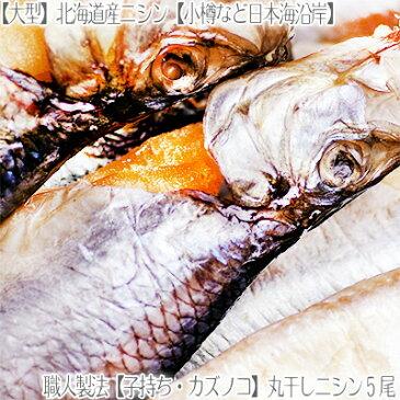 【特大 ニシン にしん 北海道産】【子持ち】日本海産 丸干しニシン×5枚【大型330g前後】食べごたえあります。【職人技】旨みを引き出す絶妙な干物加減!【北海道ブランド】数の子 姿干し 小樽など