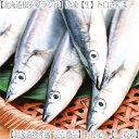 ■ さんま 秋刀魚 【航空便】最短翌日お届け!.■ 生サンマ 累計販売総数【110t】 北海道通販!...