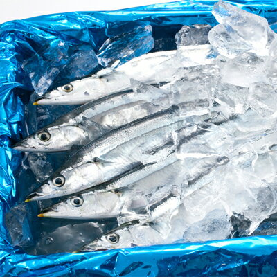 【鮮魚】生さんま、生イワシ、うなぎ、鮭、干物>【獲れたて】北海道道東産 生サンマ