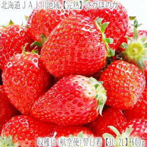 ■北海道【航空便で】翌日お届け!イチゴはスピードが大切!.あまおう にも負けない サガホノカ...