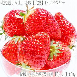 ■北海道【航空便で】翌日お届け!イチゴはスピードが大切!.あまおう にも負けない ケンタロウ...