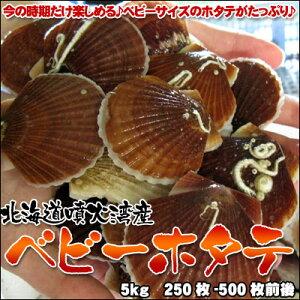 食べやすサイズの美味しいホタテ♪ホタテ 稚貝 ベビーホタテホタテといえば北海道!ベビーホ...
