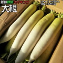 新鮮野菜 バイキング 大根 Lサイズ 8-10本入 10kg 1本約1kg 送料無料 ※沖縄は送料別途加算