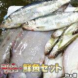鮮魚セット 居酒屋 業務用 北海道産 3kg 送料無料 ※沖縄送料別途加算