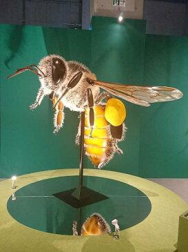 アニマルビッグフィギュアシリーズ 昆虫【ビックサイズ ミツバチ(蜂)】(等身大フィギュア)