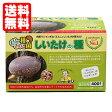 【送料無料】シイタケ種駒【しいたけ種駒400個】 [しいたけ菌/椎茸菌/しいたけ栽培/シイタケ栽培/椎茸栽培] 日本で一番売れてます!