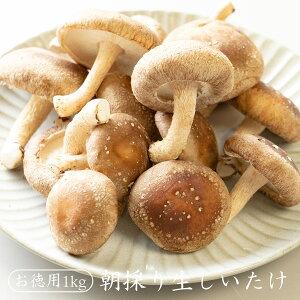 朝採り生しいたけ【お徳用 1kg】  生シイタケ 生しいたけ 生椎茸 国産 菌床しいたけ 送料無料 通販限定