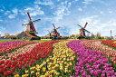 チューリップと風車小屋 オランダ ジグソーパズル 外国の風景 1000ピース 50×75cm 10-