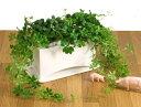 スタイリッシュ・モダンでインテリア性抜群!人気のつる性観葉植物 開店祝い、新築祝い 贈り物...