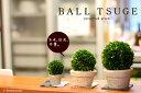 プリザーブド観葉植物 ツゲボックスウッド トピアリーどこでも飾れる♪プリザーブド観葉植物TSU...