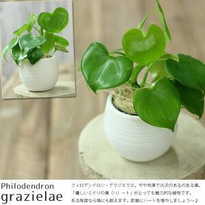 季節のお薦め観葉植物を、可愛いボールPOTでお届け!「土」を使わないから、色んな場所に置ける...