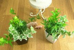 観葉植物 寄せ植え スタイリッシュ アイビー ミニ インテリア【観葉植物】ヘデラ3種の寄せ植え...