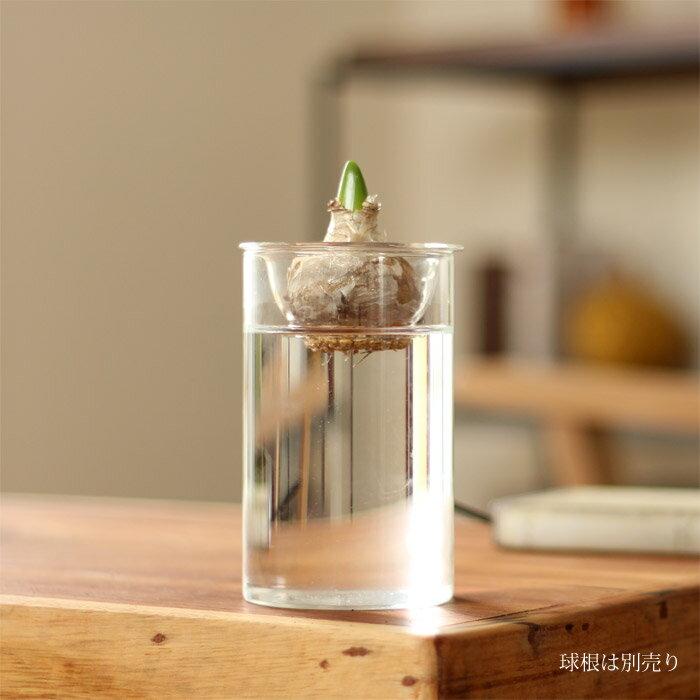 何かと使えるガラス花瓶 Sサイズ※球根は商品に含まれません