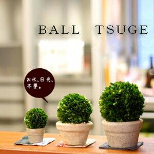 どこでも飾れる♪プリザーブド観葉植物TSUGE(ツゲ)のボール仕立・Sサイズ×1【プリザーブド…