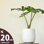 この鉢、使いやすくお勧めです!白マット調、そして丸みを帯びた優しいカタチの陶器鉢(L)【直径20.5cm(口径は16.5cm)×高さ20.5cm】※植物は商品には含まれません
