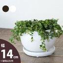 【おしゃれな植木鉢】ボール型・陶器鉢(14cm)の写真