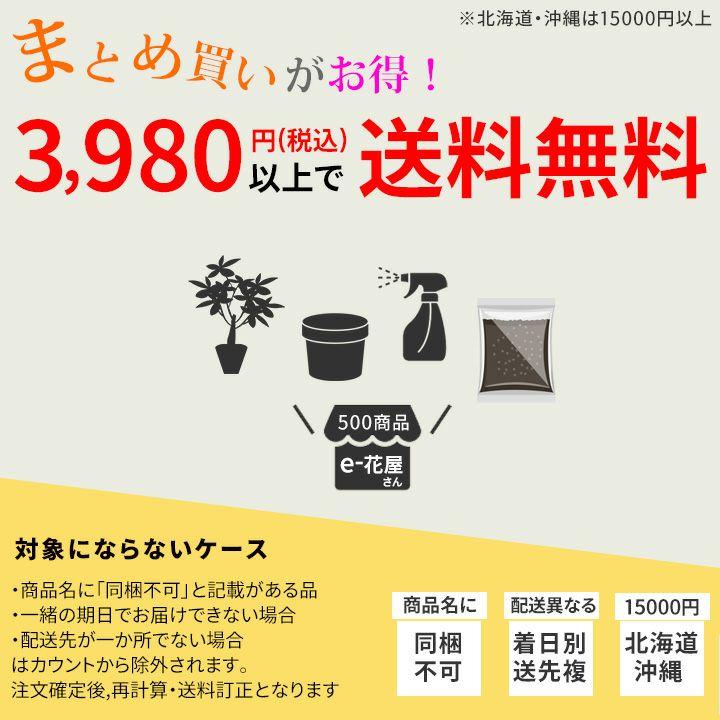 【お届けは9/3〜】観葉植物ポトスエンジョイ・ミニball鉢(今月の植物)