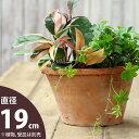 ナチュラル・アンティーク風 テラコッタ植木鉢直径19cm×高さ12cm【モスポット ※植物は別売り】