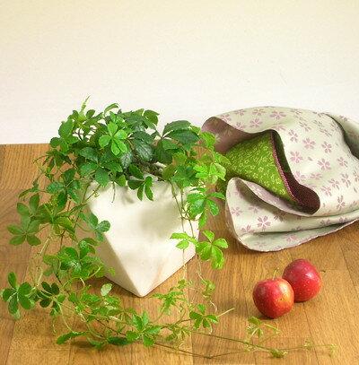 完売御礼!お届けは6/7〜シュガーバイン多面体の陶器鉢(今月の植物)