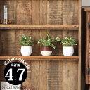 【お届けは6/11〜】観葉植物 ポトスエンジョイ・ミニball鉢(今月の植物)の写真